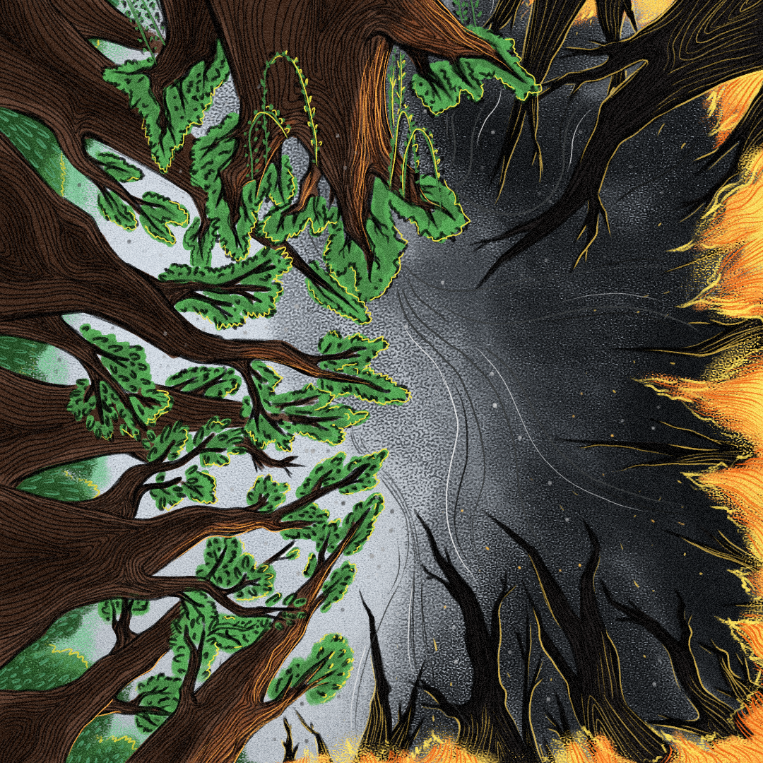 forest fire3